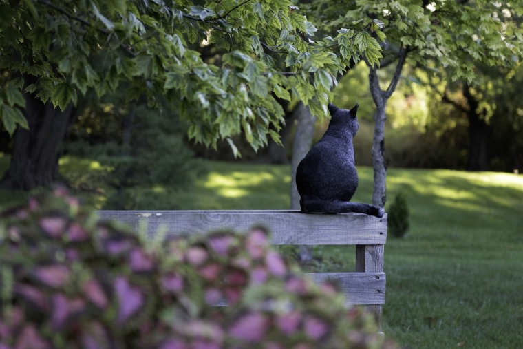 black-cat-4507309_1920